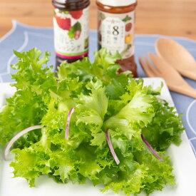 フリルレタスと8種の万能たれ 赤&青しそドレッシングセット 健康野菜村 熊本県産 産地直送 生鮮野菜 レタス 無農薬 新鮮