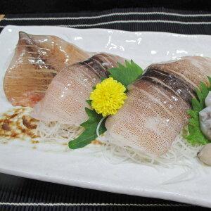 日本海いか小僧姿造り 10尾 イカ 冷凍 姿造り 国産 刺身用 するめいか ゲソ 姿開き 船凍イカ 魚介 刺身 海鮮 新潟