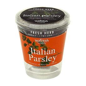 聖新陶芸 Fresh Herb イタリアンパセリ GD363-02 ハーブ栽培キット 4528757023876