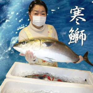 【送料無料】豊漁のお陰で最安値に挑戦中!天然寒ぶり1本(5kg)