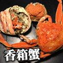 【送料無料】能登半島 香箱蟹(甲箱蟹・こうばこがに)3杯セット