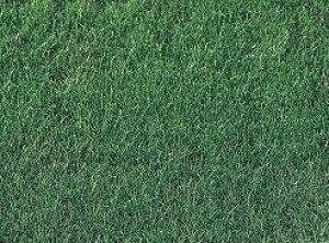 西洋芝の種GP健太くん600g9坪(30平方メートル)分