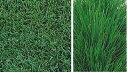 西洋芝の種ムーンライト600g 9.1坪(30平方メートル)分