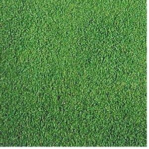 西洋芝の種A-1  1.2kg 45坪(150平方メートル)分