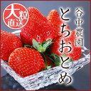 いちご プレミアムとちおとめ 約290g×4Pac 送料無料 期間限定 イチゴ 高級フルーツ ギフト 贈答品 ストロベリー 栃木県産