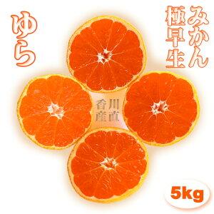 みかん 由良 ゆら 極早生 高糖度 5kg 小玉(3S〜M) 送料無料 香川産 ふるさと ミカン 蜜柑 数量限定 限定品 柑橘 柑橘類 極早生みかん 果物 くだもの フルーツ ギフト 贈答用 贈答品 特秀 秀品