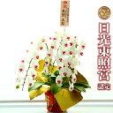 胡蝶蘭 3本立ち 大輪 40輪以上 白&赤リップ 特別仕様 母の日 送料無料 | 花 蘭 ラン お祝い 御祝 祝い 祝 開店祝い …