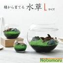 【ウォータープラント】[GD813]種から育てる水草 Lサイズ みずくさ 栽培セット 癒し アクアリウム 水景 インテ…