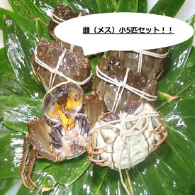 【本場中国産】上海蟹 メス 母 特売! 小5匹セット @70g前後 贈答 ギフトにオススメ 蟹 オーダー頂いてから急速冷凍