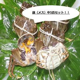 【本場中国産】上海蟹 メス 母 特売! 中5匹セット @90g前後 贈答 ギフトにオススメ 蟹 オーダー頂いてから急速冷凍