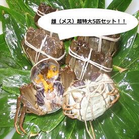 【本場中国産】上海蟹 メス 母 特売! 超特大5匹セット @150g前後 贈答 ギフトにオススメ 蟹 オーダー頂いてから急速冷凍