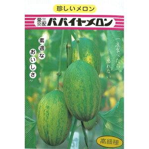 メロン 種 【パパイヤメロン】 小袋 ( 種 野菜 野菜種子 野菜種 )