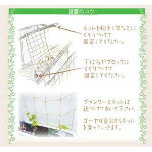 【送料無料】グリーンカーテン栽培セットゴーヤ苗2本付き【ゴーヤの緑のカーテンお試しセット】プランターとネットと肥料も付いた初心者向けセット♪