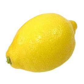 柑橘類の苗 【 元祖 レモン 1年生苗木 】 [ 香酸柑橘 香り かんきつ カンキツ 柑橘 苗 ]