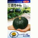 かぼちゃ 種 【坊ちゃん】 10粒 ( 種 野菜 野菜種子 野菜種 )
