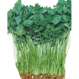 三つ葉 種 【 関西三ツ葉 】 種子 小袋(約15ml) ( 種 野菜 野菜種子 野菜種 )