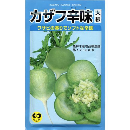 【エントリーでポイント5倍】大根 種 【カザフ辛味大根】 小袋 ( 種 野菜 野菜種子 野菜種 )