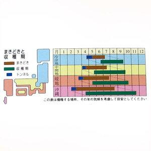 沖縄純白ゴーヤ(ゴーヤの種)5ml