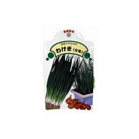 わけぎ 種球 約1kg [ ネギ 葱 ワケギ 分葱 球根 種 ]