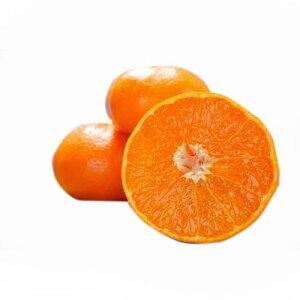 柑橘類の苗 【 せとか 1年生苗木 】 [ 雑柑 オレンジ かんきつ カンキツ 柑橘 苗 ]