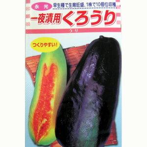 ウリ 種 【くろうり】 小袋 ( 種 野菜 野菜種子 野菜種 )