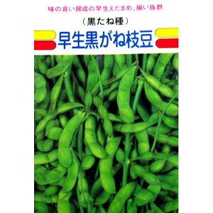 枝豆 種 【 早生黒がね 】 種子 小袋(約1dl) ( 種 野菜 野菜種子 野菜種 )