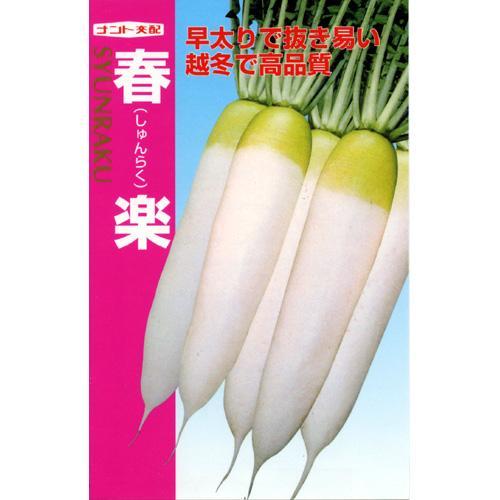 大根 種 【 春楽 】 種子 小袋(約3ml) ( 種 野菜 野菜種子 野菜種 )