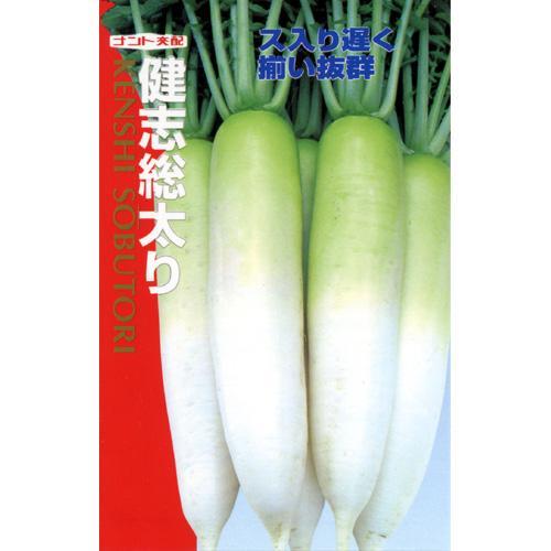 大根 種 【 健志総太り 】 種子 小袋(約7ml) ( 種 野菜 野菜種子 野菜種 )