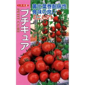 ミニトマト 種 【プチキュア】 500粒 ( 種 野菜 野菜種子 野菜種 )