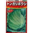 キャベツ 種 【 トンガリボウシ 】 種子 小袋(約100粒) ( 種 野菜 野菜種子 野菜種 )