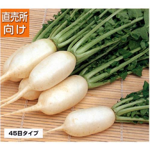 大根 種 【 雪美人 】 種子 小袋(約20ml) ( 種 野菜 野菜種子 野菜種 )