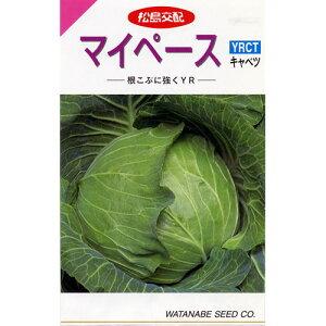 キャベツ 種 【 マイペース 】 種子 小袋(約150粒) ( 種 野菜 野菜種子 野菜種 )