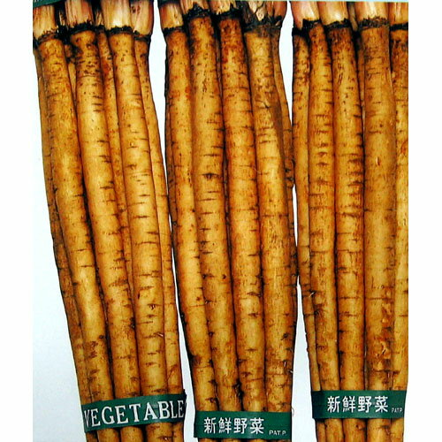 ごぼう 種 【ダイエット】 小袋(約10ml) ( 種 野菜 野菜種子 野菜種 )