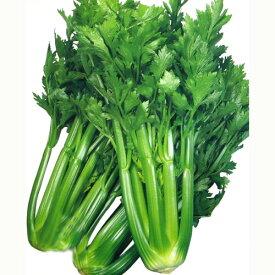 セルリー 種 【トップセラー】 RF 0.8ml ( 種 野菜 野菜種子 野菜種 )