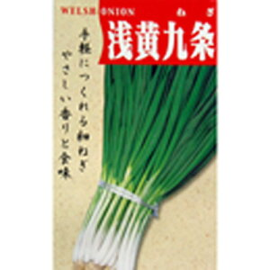 ネギ 種 【浅黄系九条】 50ml ( 種 野菜 野菜種子 野菜種 )