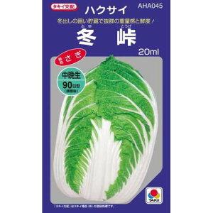 冬峠(白菜の種)20ml
