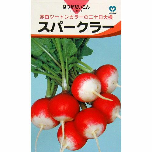 廿日大根 種 【スパークラー】 小袋(約10ml) ( 種 野菜 野菜種子 野菜種 )