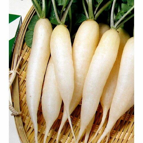 廿日大根 種 【雪小町】 小袋(約10ml) ( 種 野菜 野菜種子 野菜種 )