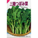 漬け菜 種 【 三陸つぼみ菜 】 種子 小袋(約4ml) ( 種 野菜 野菜種子 野菜種 )