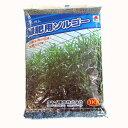緑肥・牧草 種 【 ソルゴー 】 種子 1kg ( 種 野菜 野菜種子 野菜種 )
