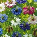 ニゲラ 種 【 ミスジーキル混合 】 小袋 ( ニゲラの種 花の種 )