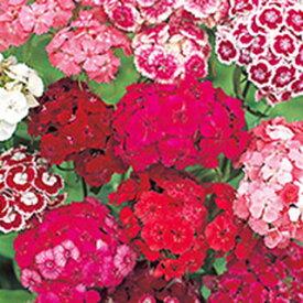 美女なでしこ 種 【 切り花用 混合 】 実咲小袋 ( 美女なでしこの種 花の種 )