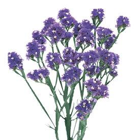 スターチス 種 【 エキストラ ブルー 】 2ml ( スターチスの種 花の種 )
