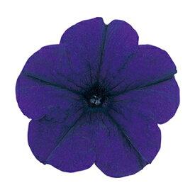 ペチュニア 種 【 バカラ ブルー(Ver.2) 】 ペレット1000粒 ( ペチュニアの種 花の種 )