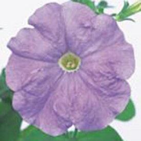 ペチュニア 種 【 バカラ ライトブルー 】 1000粒 ( ペチュニアの種 花の種 )