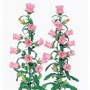 カンパニュラ 種 【 チャンピオン ピンクver.2 】 ペレット1000粒 ( カンパニュラの種 花の種 )