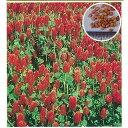 緑肥・牧草 種 【 クリムソンクローバ くれない 500g 】 種子 500g ( 種 野菜 野菜種子 野菜種 )