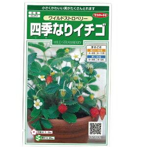 【一面いい香り!ワイルドストロベリー】四季なりイチゴ 小袋