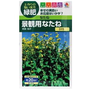 緑肥・牧草 種 【 景観用なたね 】 種子 小袋(20ml) ( 種 野菜 野菜種子 野菜種 )