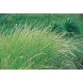緑肥・牧草 種 【 ナギナタガヤ 】 種子 1kg ( 種 野菜 野菜種子 野菜種 )